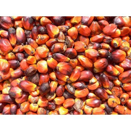 Palmnoten 250 gram